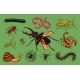 Set of Insects - GraphicRiver Item for Sale