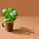 coffee plant in a brown cup - PhotoDune Item for Sale