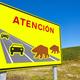 Bear road traffic signal. Endangered species alert. Warning. Spain - PhotoDune Item for Sale