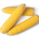cob corn - PhotoDune Item for Sale