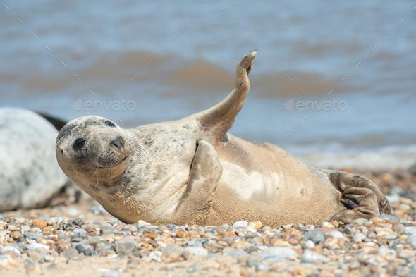 joyful seal on a beach - Stock Photo - Images