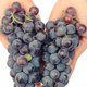 Hand with purple ripe grapes, healthy nutrition - PhotoDune Item for Sale