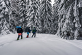 Three tourists with a backpacks in the snowy forest - PhotoDune Item for Sale
