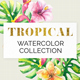 Tropical Floral Collection - GraphicRiver Item for Sale