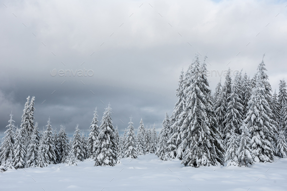 Christmas and New Year background with winter trees in the mountains covered with snow - Stock Photo - Images