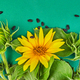 Flowers of sunflower, leaves and seed. Autumn Concept. - PhotoDune Item for Sale