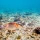 Underwater photos of sea fish - PhotoDune Item for Sale