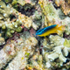 Underwater photos of small sea fish - PhotoDune Item for Sale
