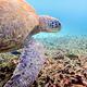 Underwater photos of Green Sea Turtle - PhotoDune Item for Sale
