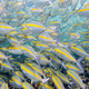 Underwater photos of sea fish herd - PhotoDune Item for Sale