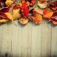 Autumn border - PhotoDune Item for Sale