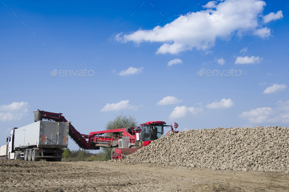 vehicle harvesting sugar beets - Stock Photo - Images
