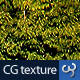Forest Texture - 3DOcean Item for Sale