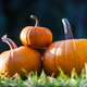 Different kind of pumpkins in garden grass - PhotoDune Item for Sale