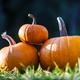 Different kind of pumpkins in garden grass - PhotoDune Item for Sale