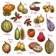 Exotic Fruits and Tropical Berries - GraphicRiver Item for Sale
