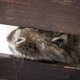 Rabbit in wintertime - PhotoDune Item for Sale