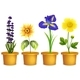 Different Types of Flowers in Pots - GraphicRiver Item for Sale