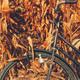 Vintage bicycle in corn field - PhotoDune Item for Sale