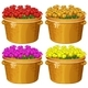 Four Baskets Of Roses In Different Colors - GraphicRiver Item for Sale
