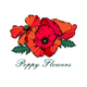 Poppy Flowers - GraphicRiver Item for Sale