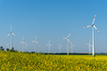 Yellow blossoming oilseed rape and some wind energy plants - PhotoDune Item for Sale