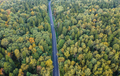 Early autumn forest with a road going throug, aerial view - PhotoDune Item for Sale