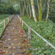Wooden path in the forest. Muniellos natural park. Asturias, Spain - PhotoDune Item for Sale