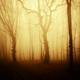golden autumn sunset light in fantasy forest background - PhotoDune Item for Sale