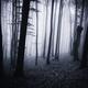 dark forest in fog - PhotoDune Item for Sale