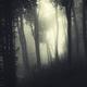 light beam in dark forest landscape - PhotoDune Item for Sale