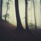 morning light in foggy forest fantasy background - PhotoDune Item for Sale