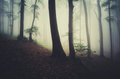 morning light in foggy forest fantasy background - PhotoDune Item for Sale