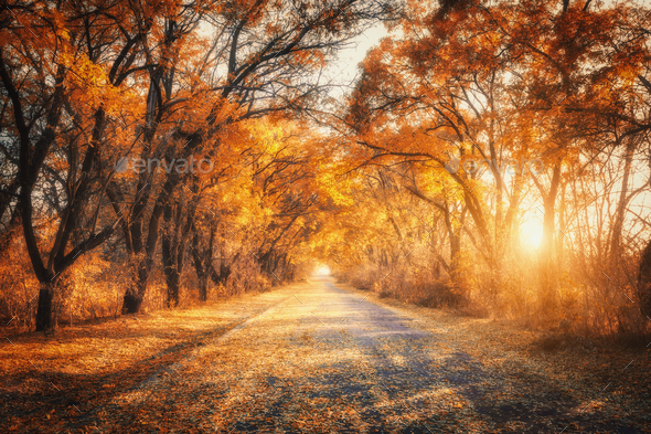 Autumn forest with country road at sunset. Trees in fall Stock Photo by den-belitsky