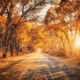 Autumn forest with country road at sunset. Trees in fall - PhotoDune Item for Sale
