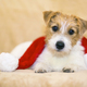 Holiday christmas happy pet dog puppy with Santa Claus hat  - PhotoDune Item for Sale