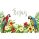 Tropical Background with Parrots - GraphicRiver Item for Sale