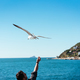 The male hand feeds the sea gulls - PhotoDune Item for Sale