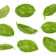 Basil leaves isolated - PhotoDune Item for Sale