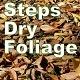 Steps Dry Foliage