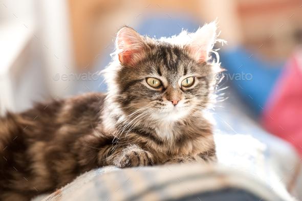 tabby kitten - Stock Photo - Images