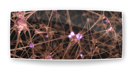 Organic Network of Neurons and Synapses