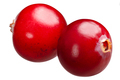 Cranberries v. oxycoccus, paths - PhotoDune Item for Sale