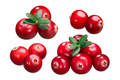 Cranberries v. oxycoccus piles, paths - PhotoDune Item for Sale