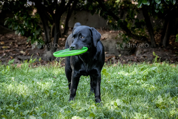 Dog with frisbee - Stock Photo - Images