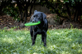 Dog with frisbee - PhotoDune Item for Sale