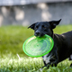 Dog & frisbee - PhotoDune Item for Sale