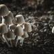 Small mushrooms toadstools - PhotoDune Item for Sale
