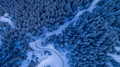 fir forest in winter - PhotoDune Item for Sale