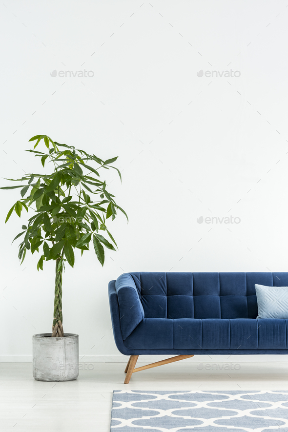 Palm next to navy blue sofa with cushion in white flat interior